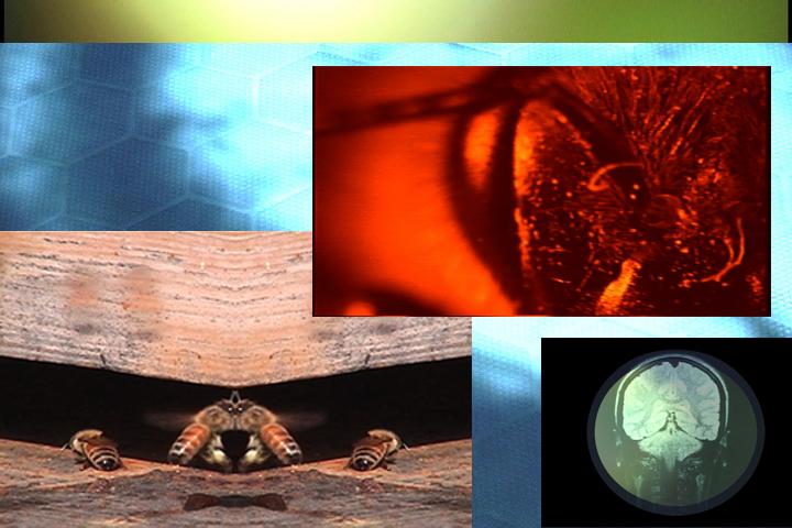 Apis Stills Collage